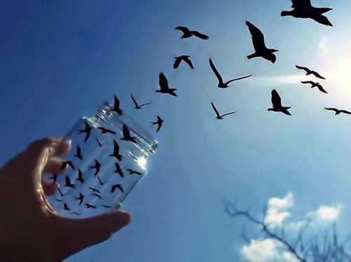 freeing-birds-photography-illusion
