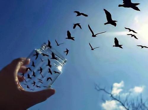 freeing-birds-photography-illusion